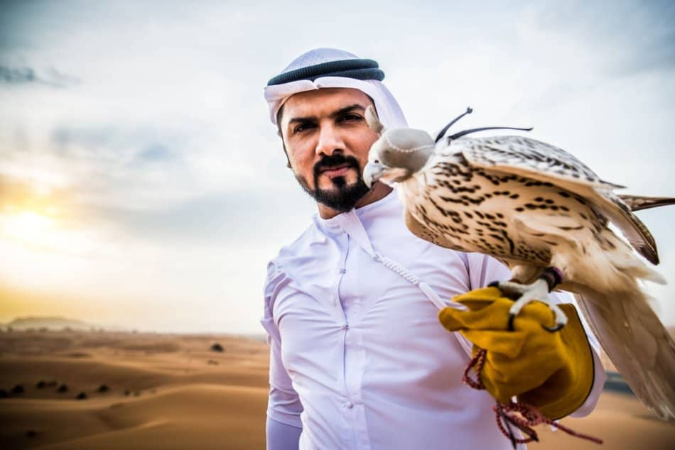 What Animals Live in Dubai - Falcon | The Vacation Builder