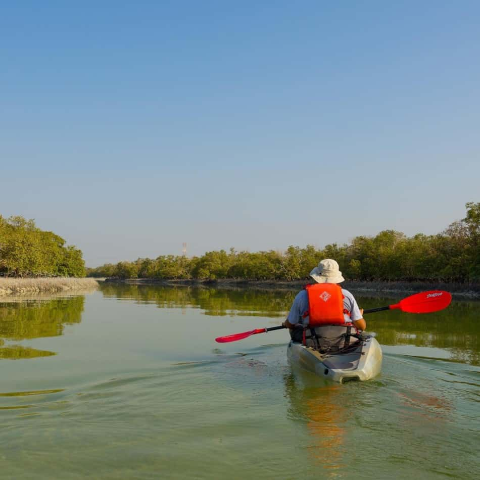Kayaking in Dubai - The Mangroves   The Vacation Builder