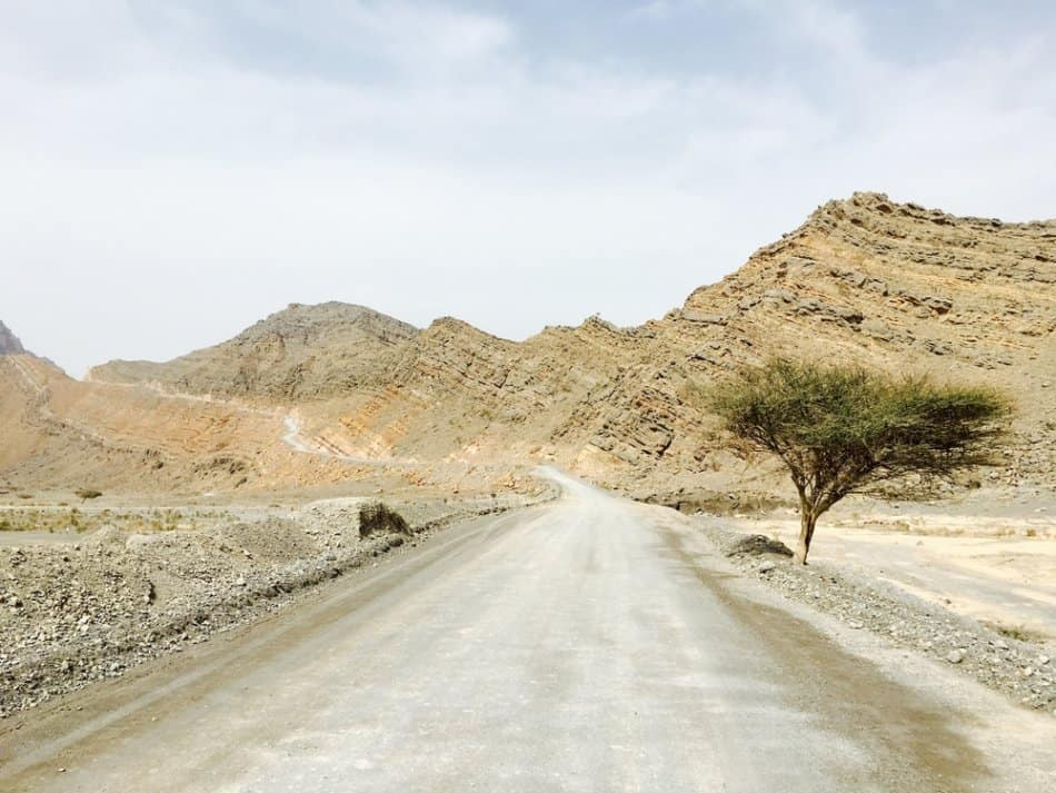 Where to go camping in Dubai - Acacia Forest | The Vacation Builder