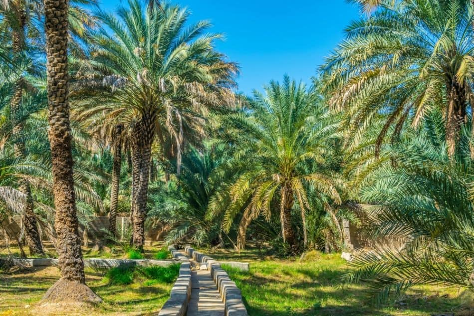 Free Things to do in Abu Dhabi - Al Ain Oasis   The Vacation Builder