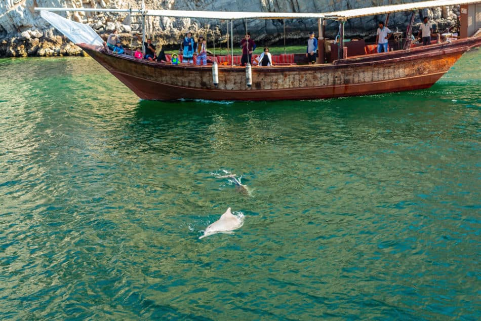 Dubai vs Muscat for Things to Do - Dolphin Watching | The Vacation Builder