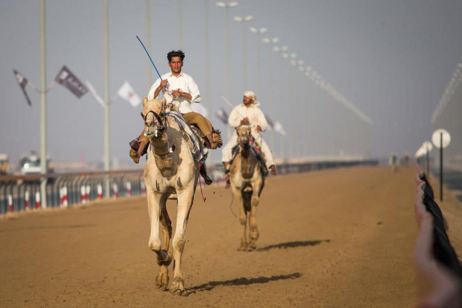 The Best 10 Things to Do in Dubai - Camel Racing   The Vacation Builder