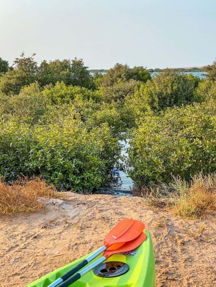 Things to do at Al Quwain Beach - Kayaking in the Mangroves | The Vacation Builder