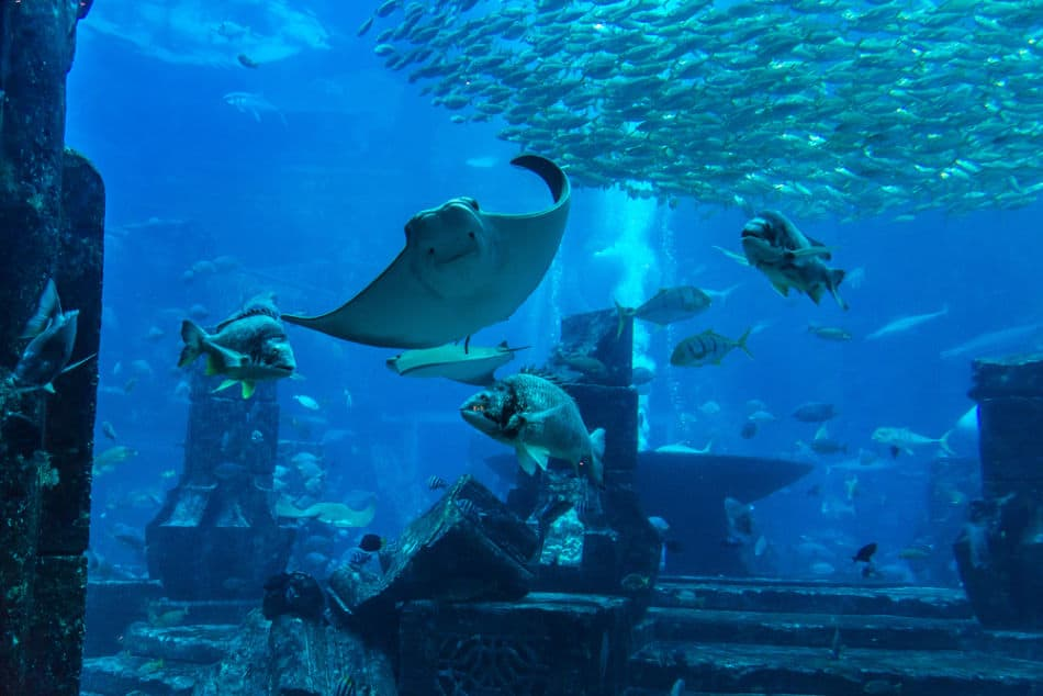 Best Places to See Wildlife in Abu Dhabi and Dubai - Dubai Mall Aquarium   The Vacation Builder